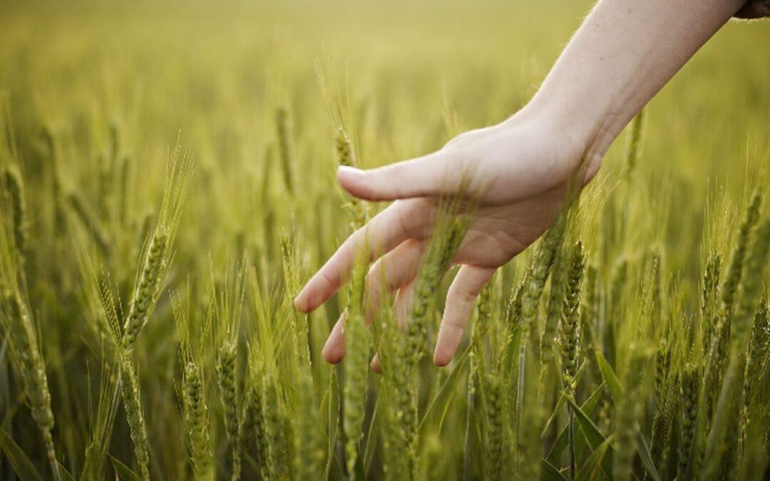 Estem en el projecte de recollida de mostres de sòl per l'inventari de nutrients al sòl de Catalunya